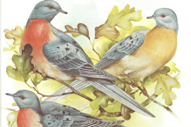 The Dodo was a Dove; The Passenger Pigeon's Coo Sounded Like Sleigh Bells; and The Original 'Stool Pigeons' Were Live Birds With Eyes Sewn Shut—Read All About the Horrors Man Bestowed Upon Gentle Doves in This Excerpt from Vanished Species